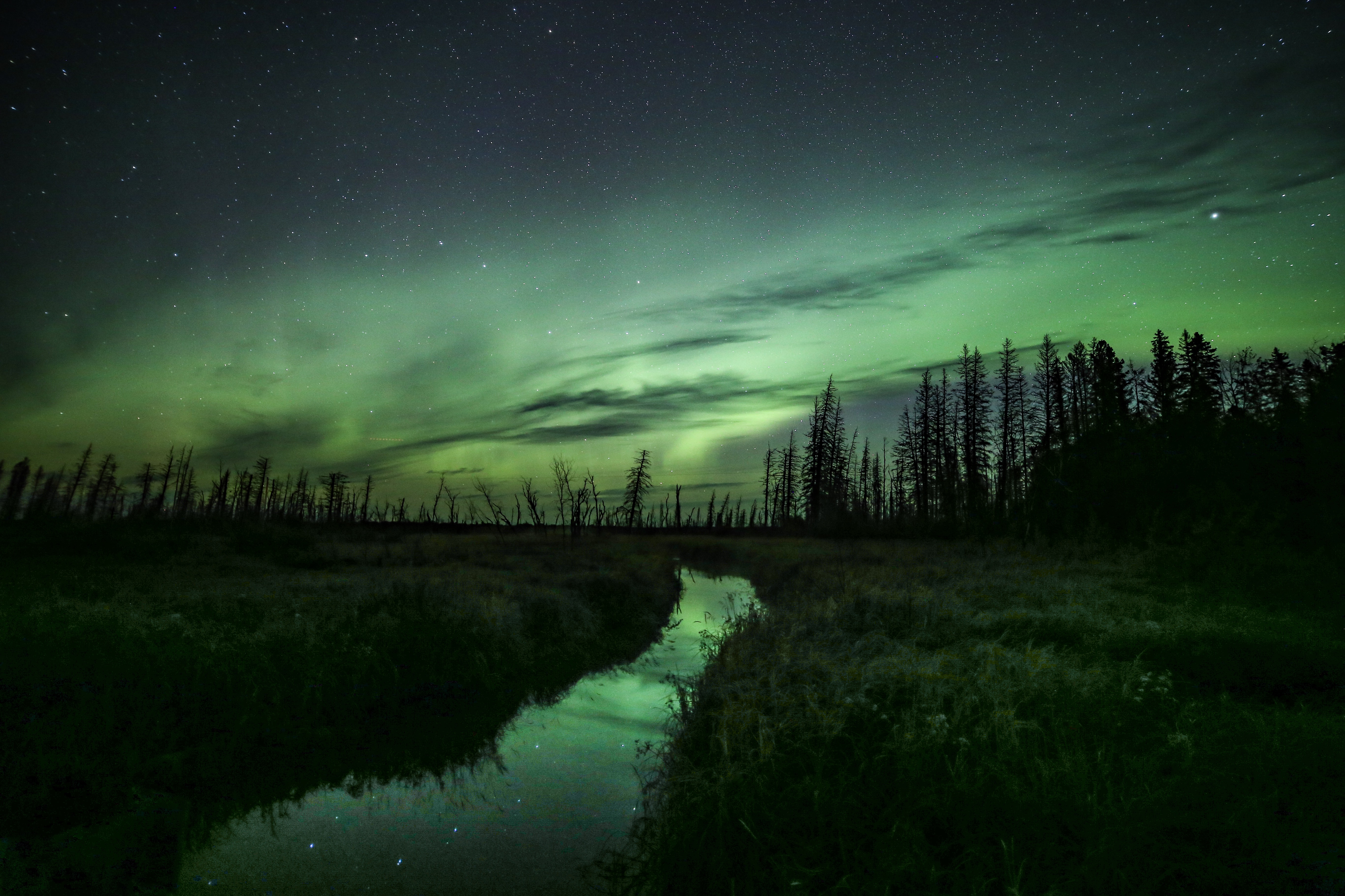 Aurora Borealis in the Boreal Forest in Saskatchewan, Canada