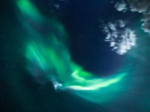 Aurora Borealis in the Boreal Forest in Saskatchewan, Canada