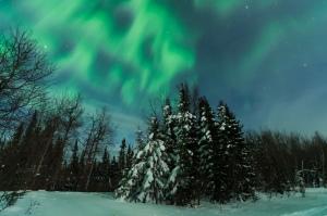 Aurora borealis and snowy trees