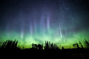 Northern lights in boreal forest Saskatchewan Canada